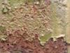 Metal_texture